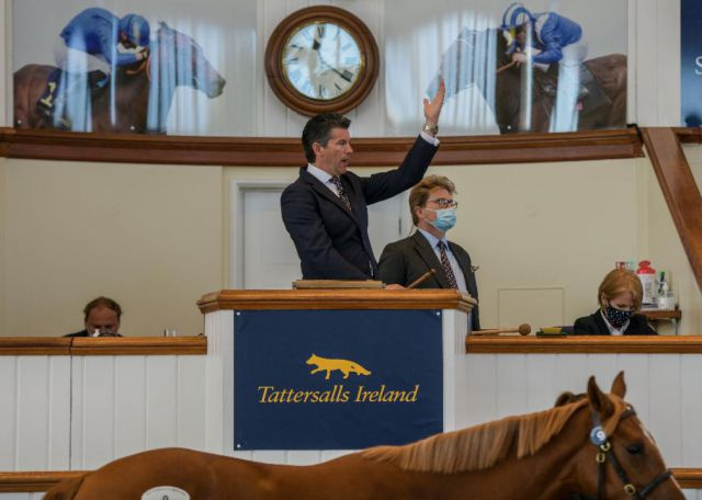 Tattersalls Irlande délocalise la Goresbridge Breeze-Up à Newmarket