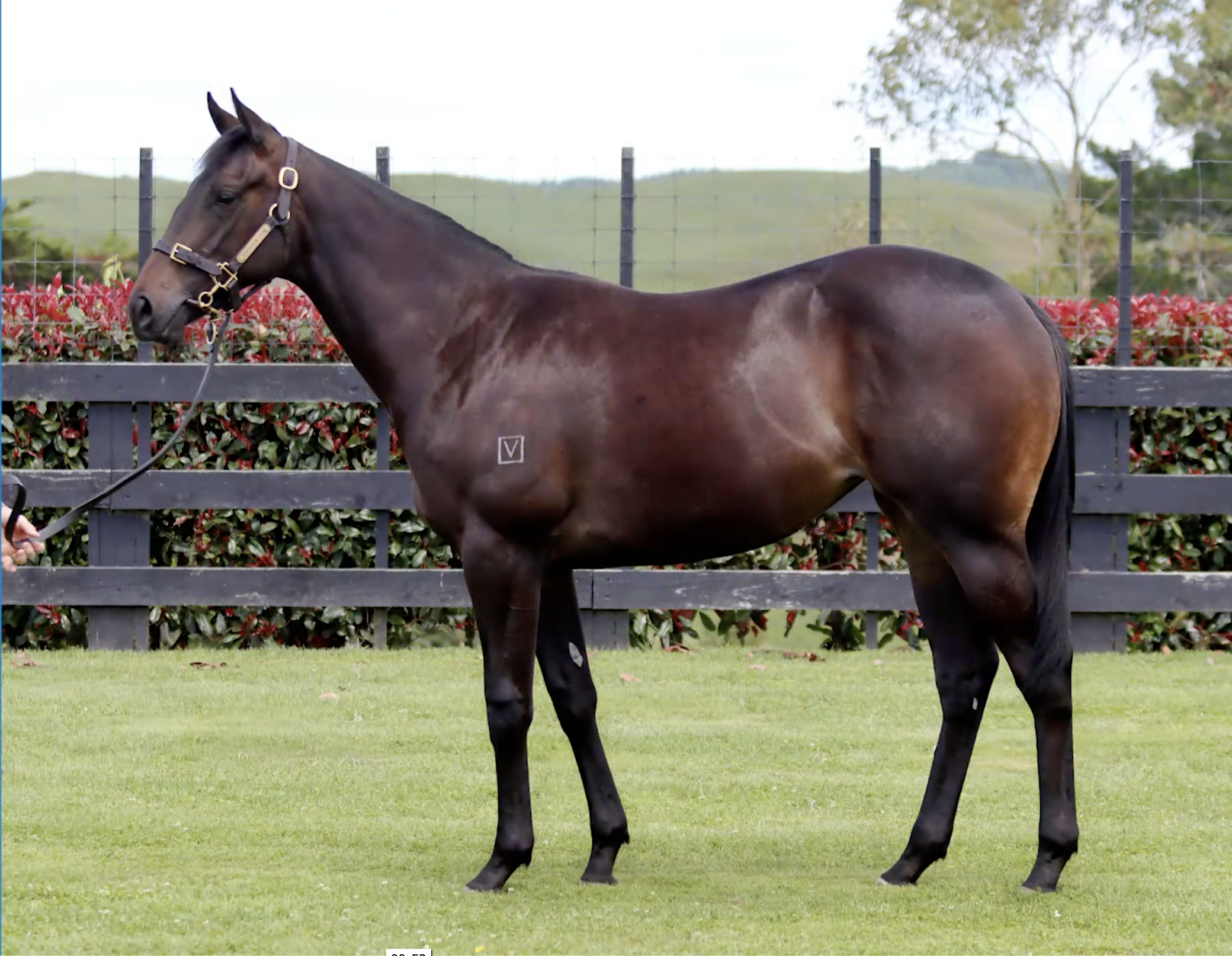 Vente de yearlings de Karaka :  les Almanzor font sensation