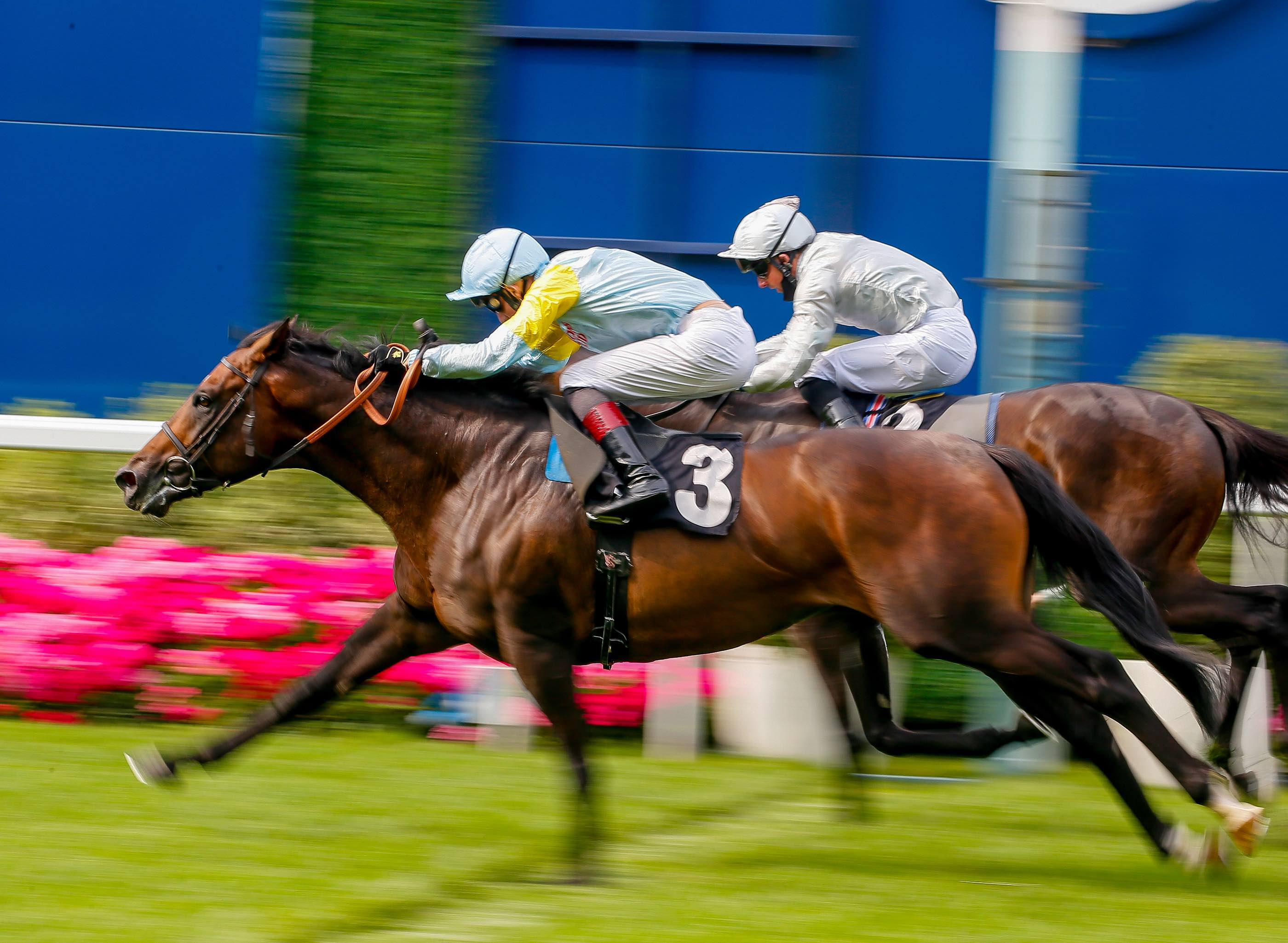 Ascot, Longines et Total Performance Data s'associent