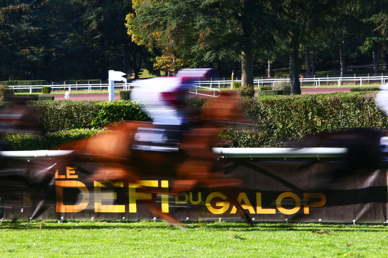 Prix Domaine du Petit Clocher (Maiden) : La belle impression de Well and Truly