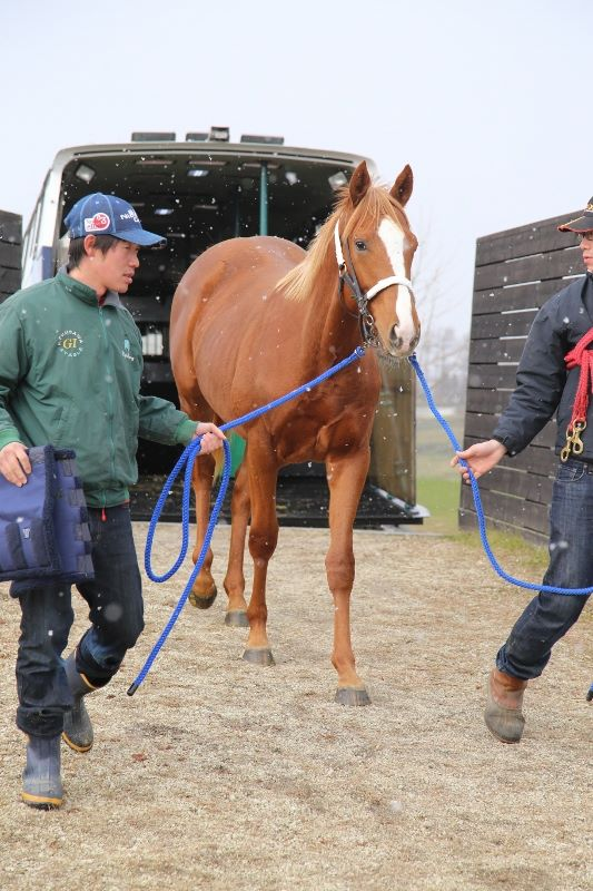 Le yearling de Frankel et Danedream est arrivé au Japon