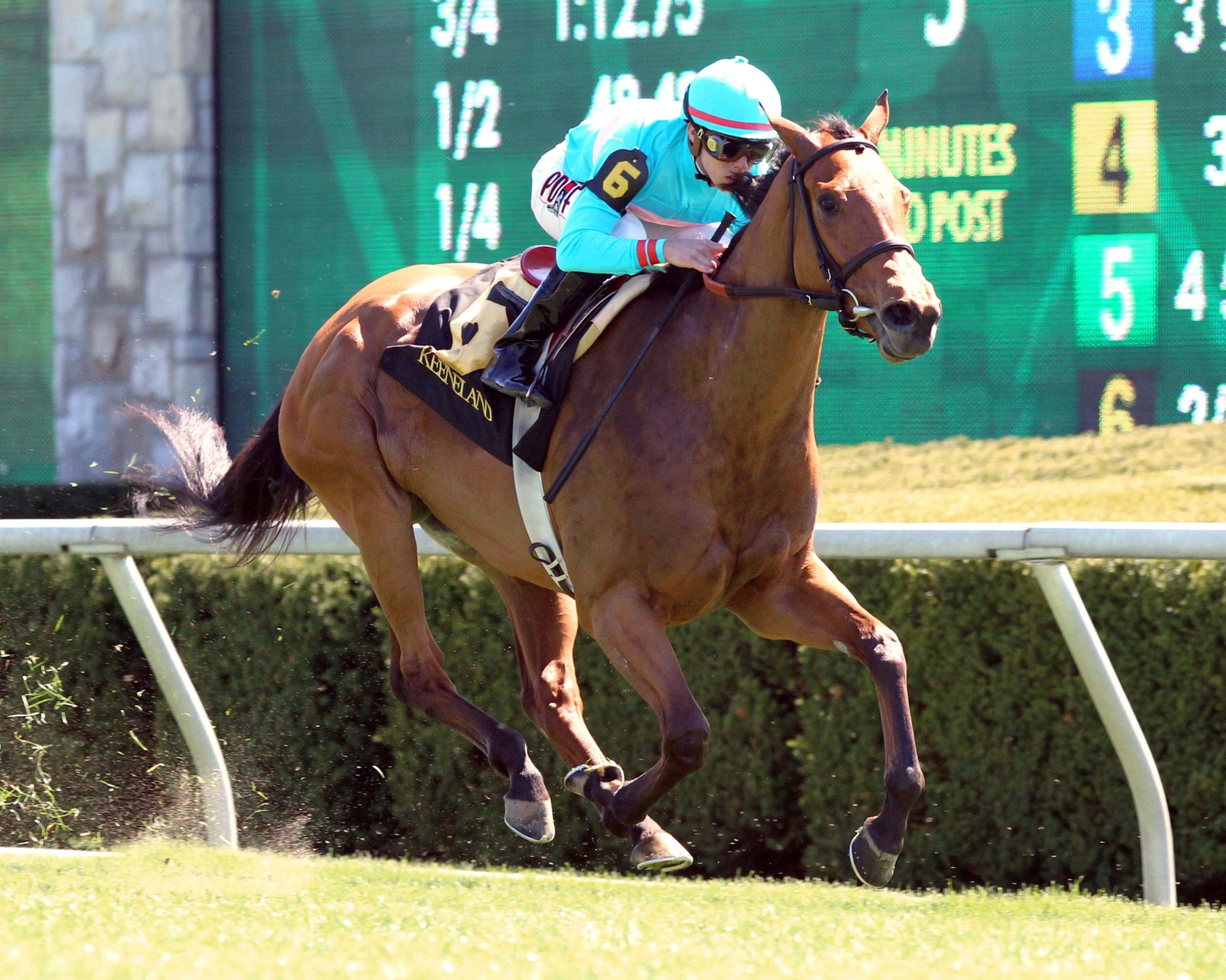 BREEDERS' CUP FILLY AND MARE TURF (Gr1) - Lady Eli, la miraculée