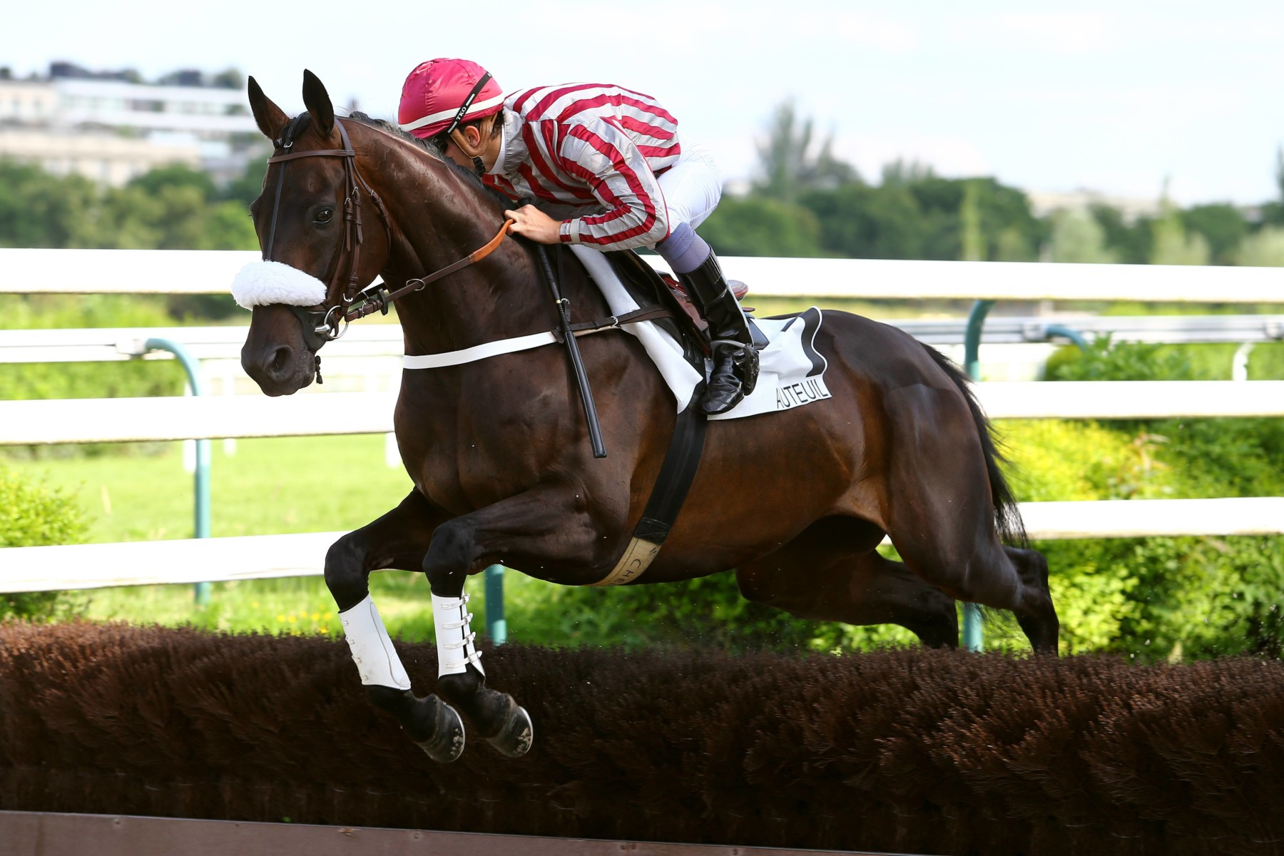 LE STEEPLE-CHASE NATIONAL DES ANGLO-ARABES À AUTEUIL