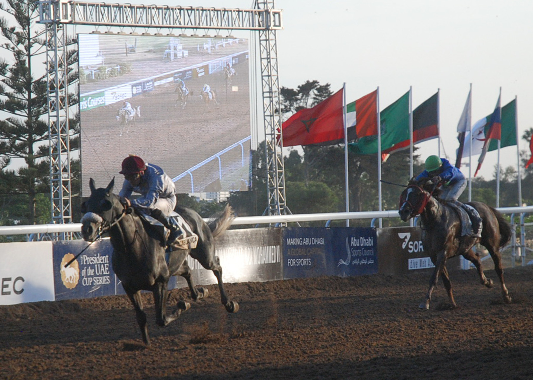 MEETING INTERNATIONAL DU MAROC 2016 - Thomas Fourcy et Al Shaqab Racing dominent chez les pur-sang arabes