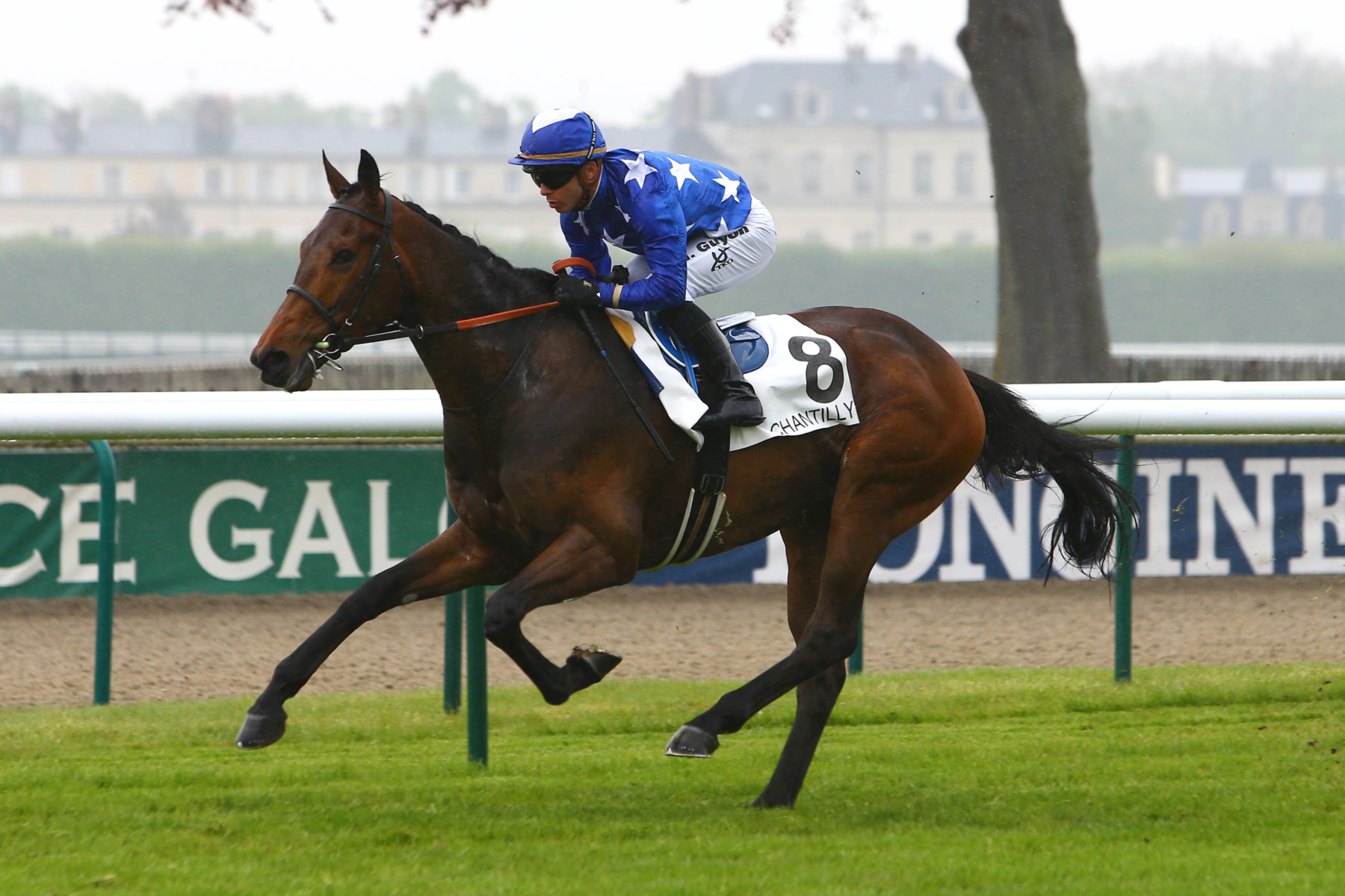 PRIX DU CONNÉTABLE (MAIDEN) - Called to the Bar est attendu au niveau black type