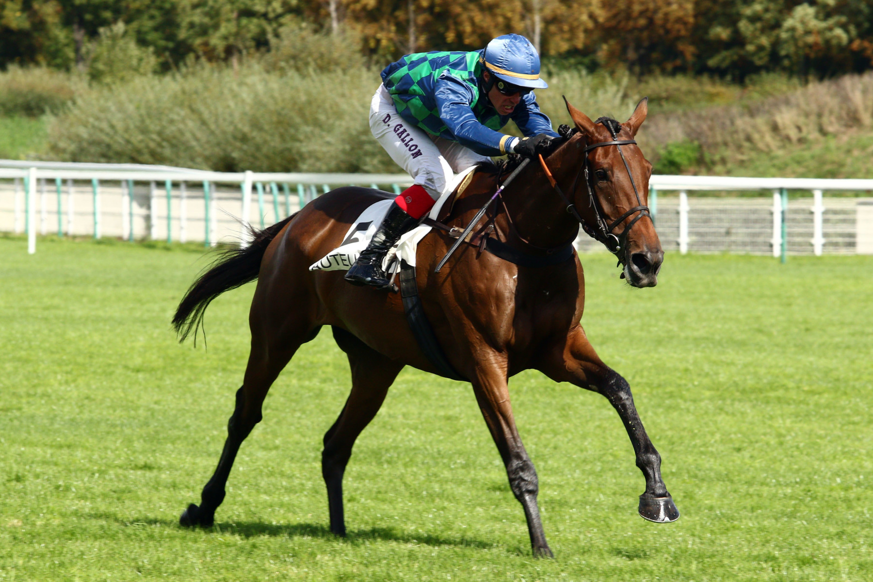 PRIX THE FELLOW - PRIX EDMOND BARRACHIN (GR3) - Dalia Grandchamp, la gazelle d'Auteuil