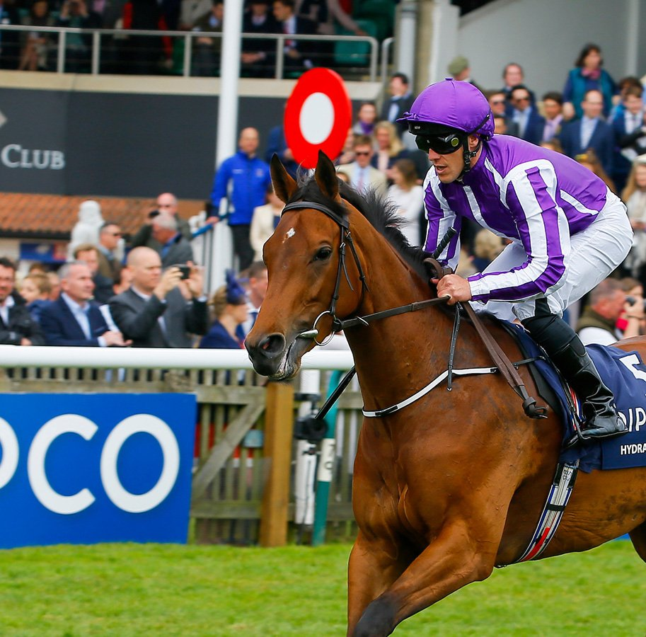 QIPCO BRITISH CHAMPIONS FILLIES & MARES STAKES (GR1) - Le record tombe avec Hydrangea, l'ex-choriste