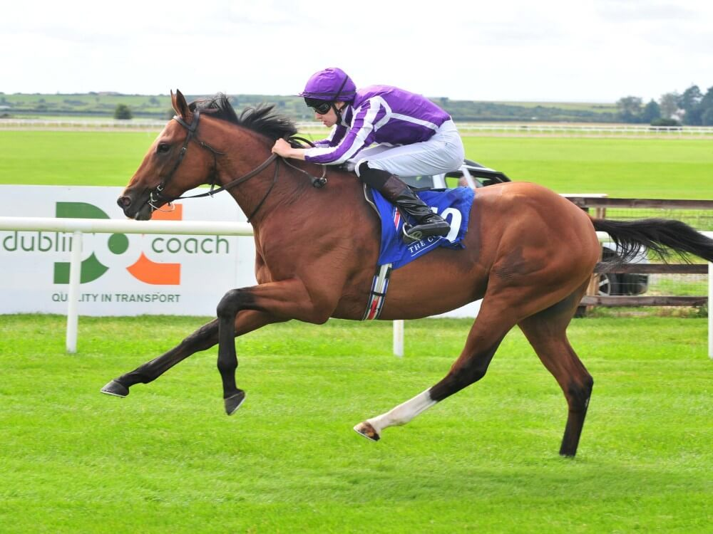 RACING POST TROPHY (Gr1) - Une édition décisive pour Aidan O'Brien