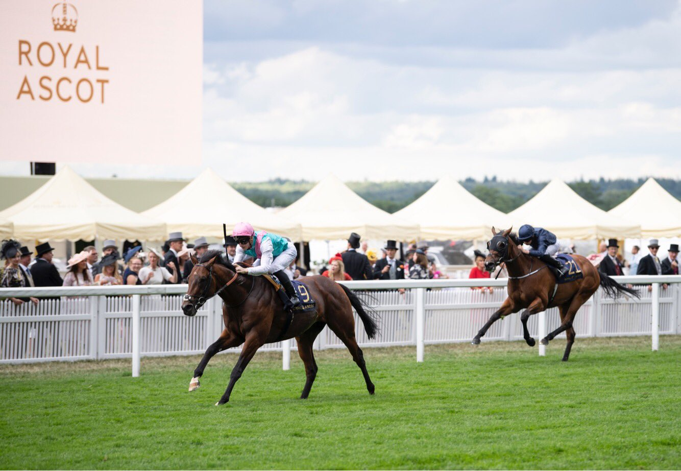 JERSEY STAKES (GR3) - Expert Eye refait surface