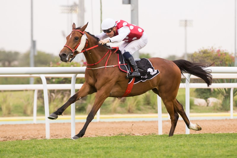 ARABIAN TRIPLE CROWN ROUND 3 - BASMAH SEALS HER PLACE AS THE TOP FOUR-YEAR-OLD IN THE UNITED ARAB EMIRATES