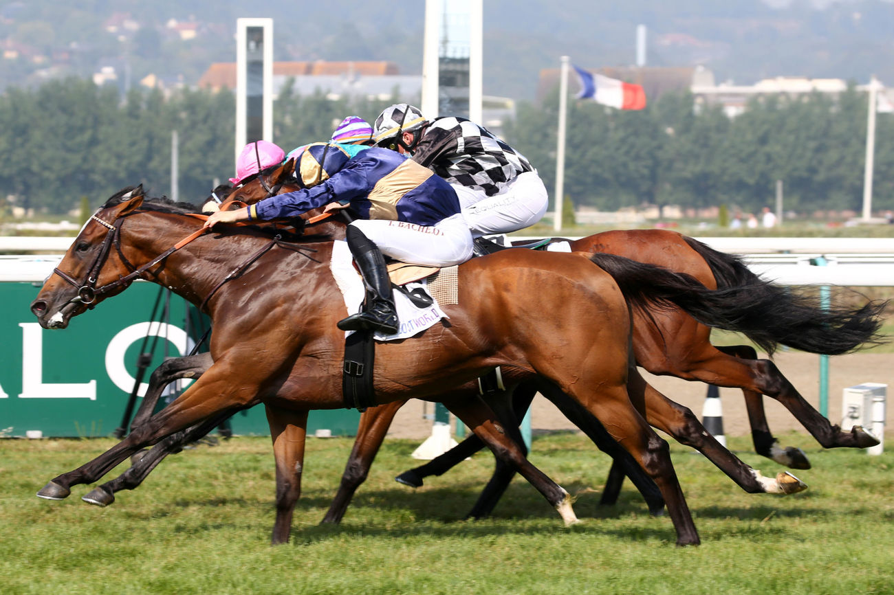Prix Just World International - Prix du Logis (Classe 2) : Le balancier favorable à Chevalier Cathare