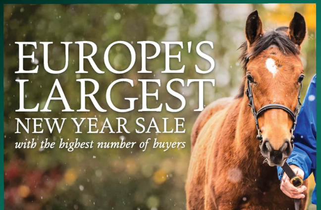 GOFFS FEBRUARY SALE - Le combat des yearlings ne fait que commencer