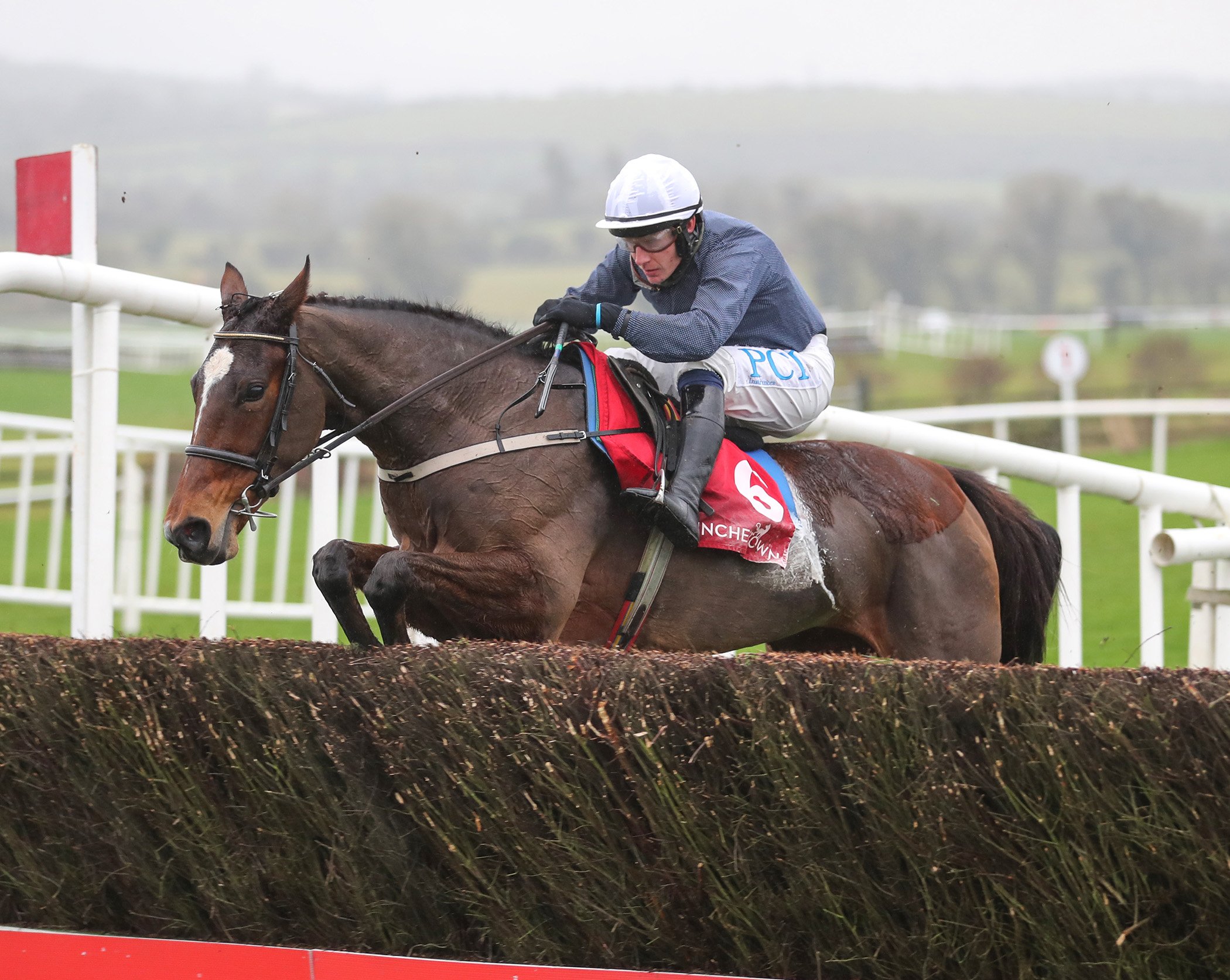Mares Novices' Chase (Gr2) : Colreevy face aux seules femelles