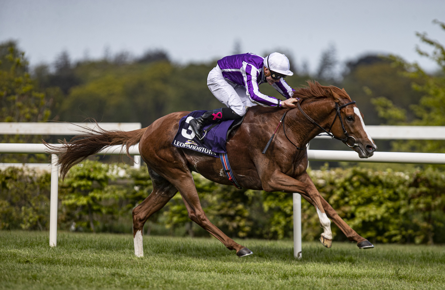 Levmoss Stakes (L) : Emperor of the Sun s'invite à la Gold Cup