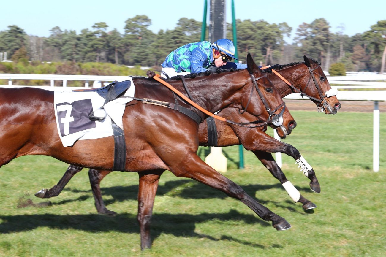 PRIX LOPES COUVERTURE (HAIES) - Fox Trot engrange