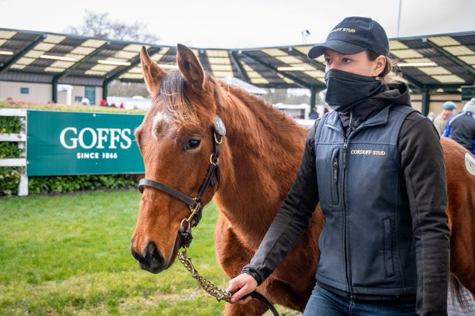 Goffs November Foal Sale : Federico Barberini séduit par le charme de Sea of Class