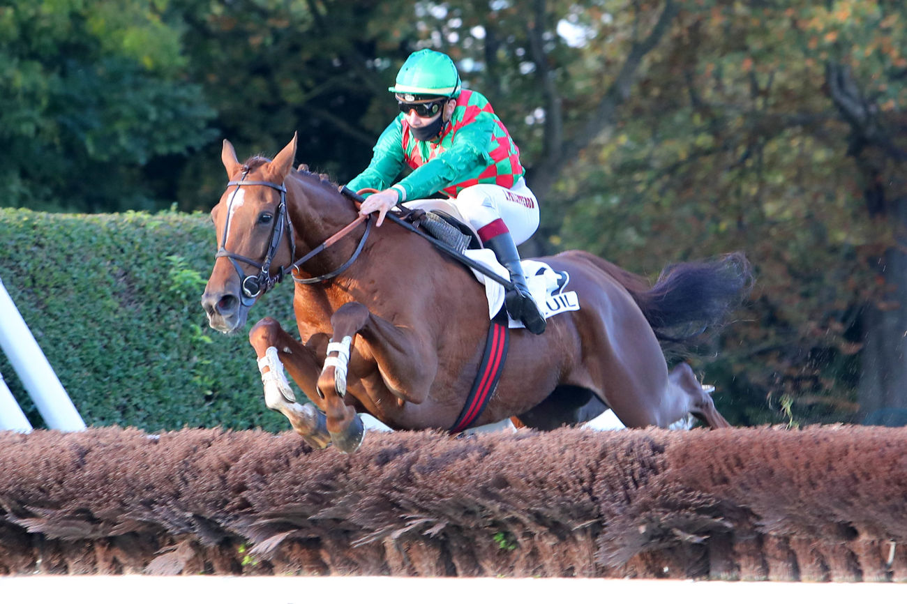 James du Berlais parmi les engagés du Champion Hurdle