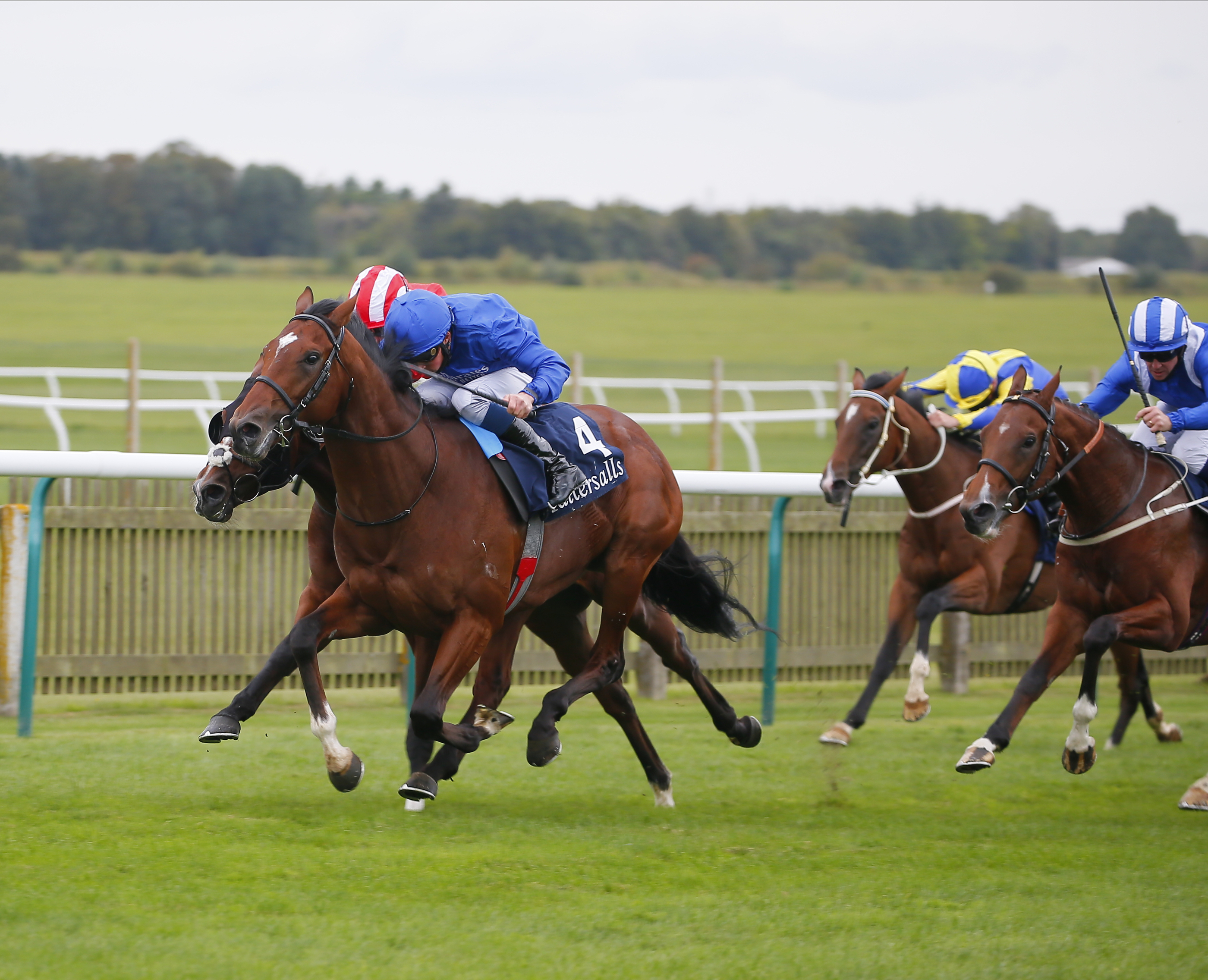Critérium International (Gr1) : un Godolphin et un O'Brien pour Normandy Bridge **