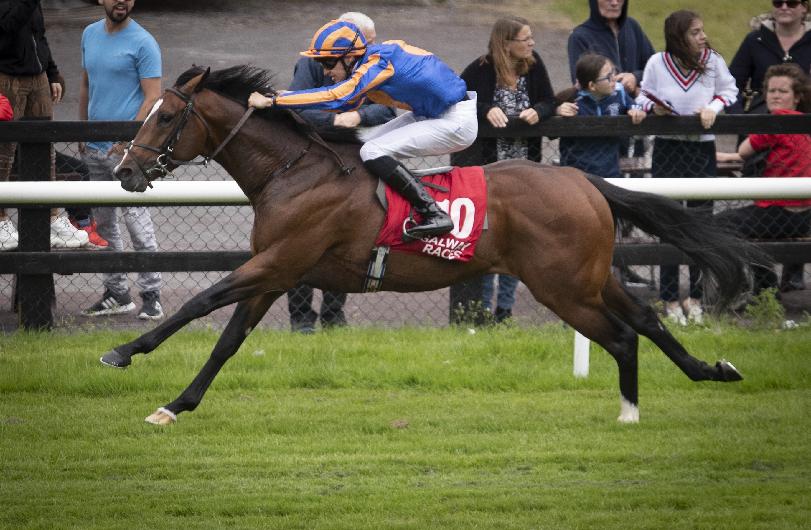 Gladness Stakes (Gr3) : On prend les mêmes et on recommence
