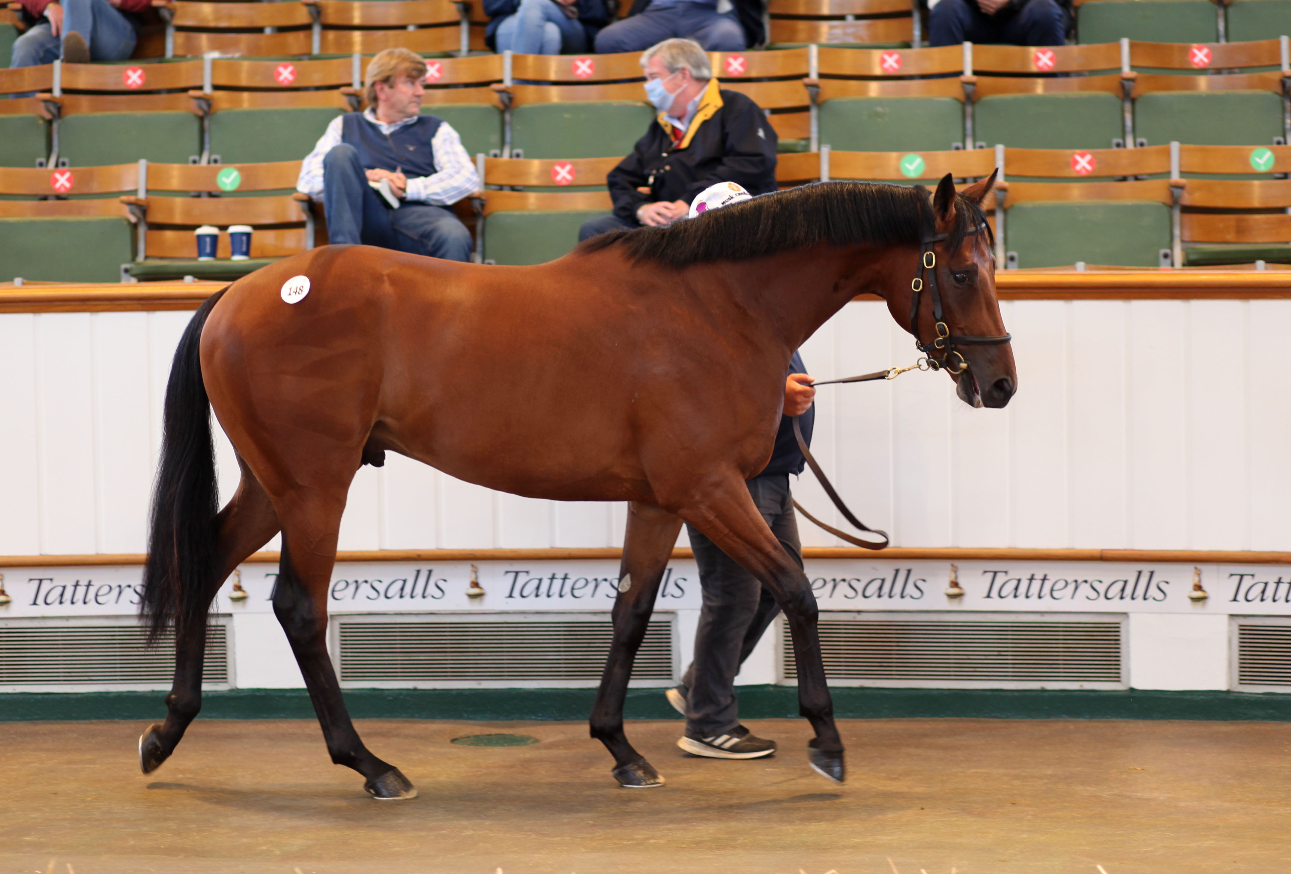 Guineas breeze up : un Goken vendu 60.000 Gns
