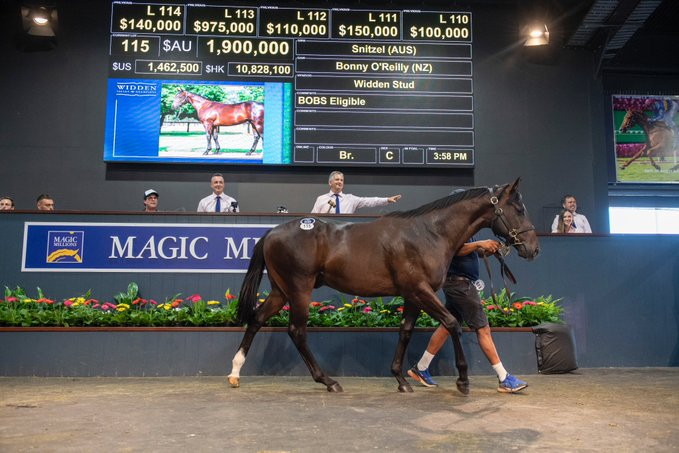 Magic Millions Gold Coast Yearling