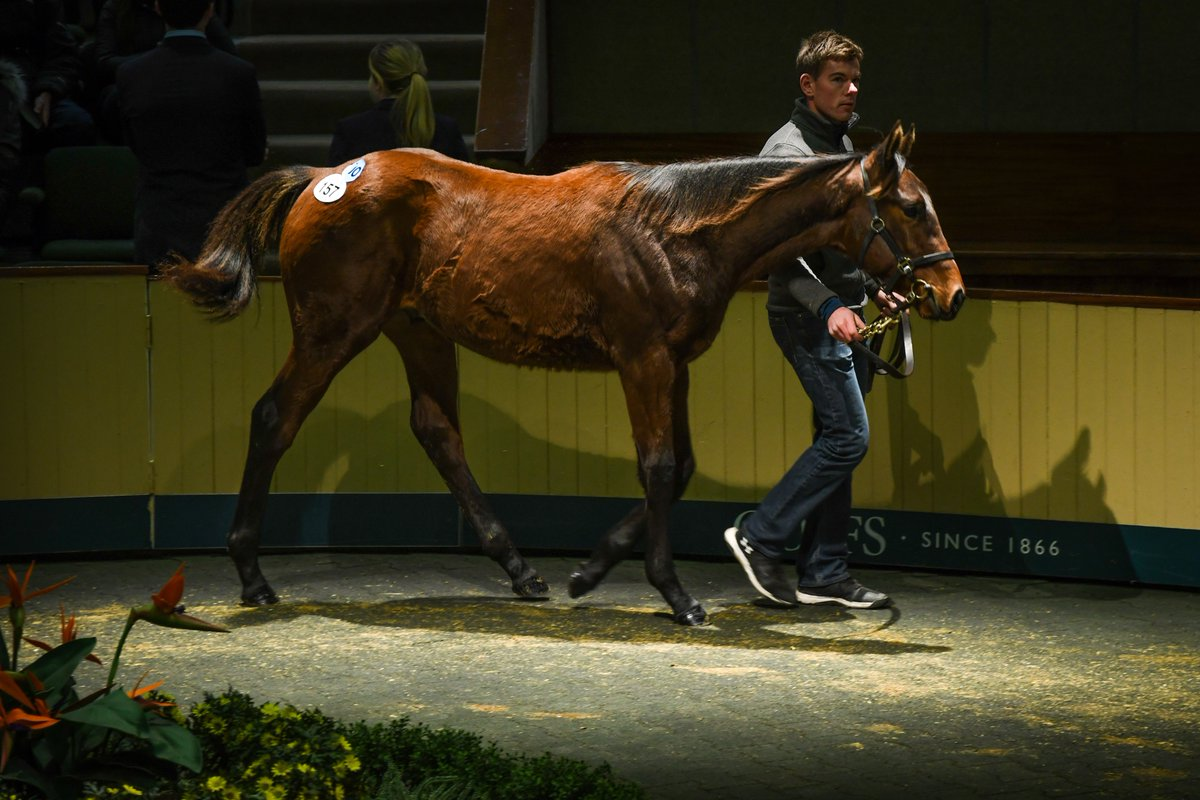 GOFFS NOVEMBER FOAL SALE - Le top price à 125.000 € pour No Nay Never