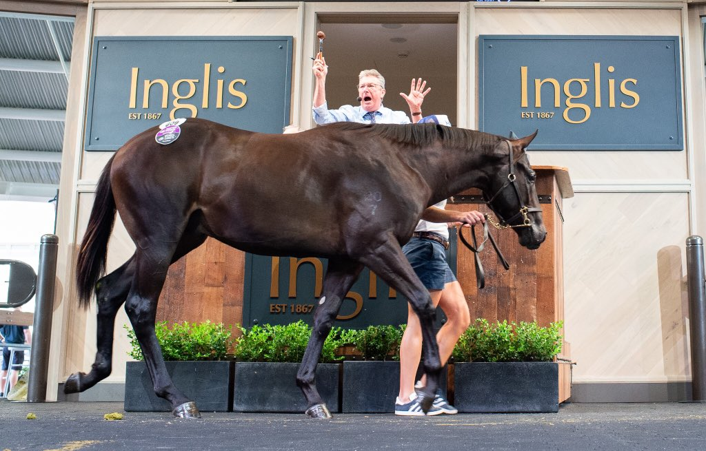 INGLIS CLASSIC YEARLING - Un top price record pour Brazen Beau