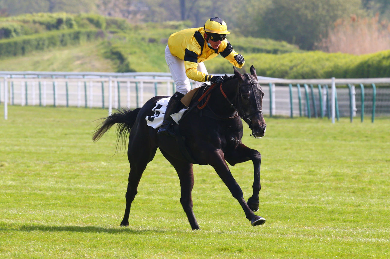 Prix André Girard (Steeple-chase) : Lord Chart dépose l'opposition