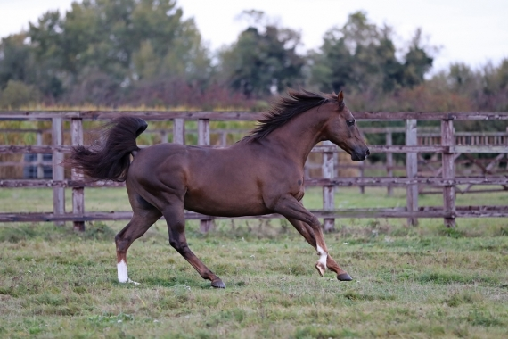 Eight young French stallions worth following this season