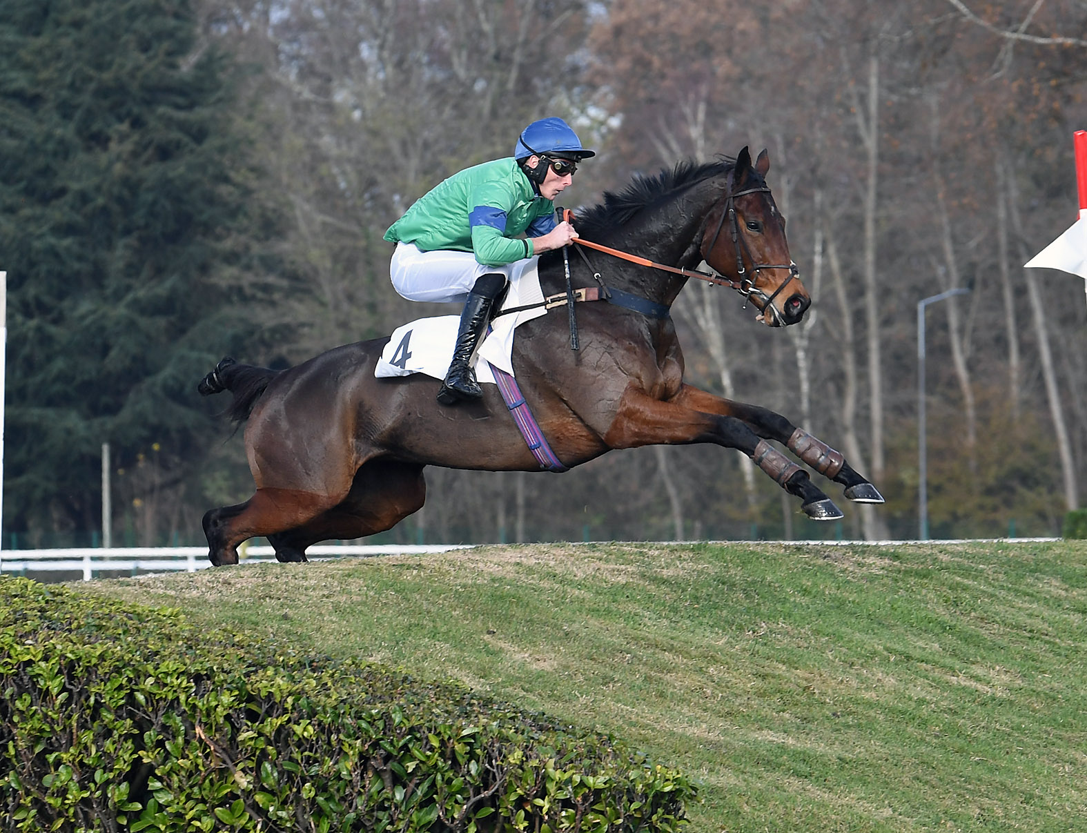 PRIX HUBERT DE NAVAILLES (CROSS-COUNTRY) - Net Lady, un vrai chat
