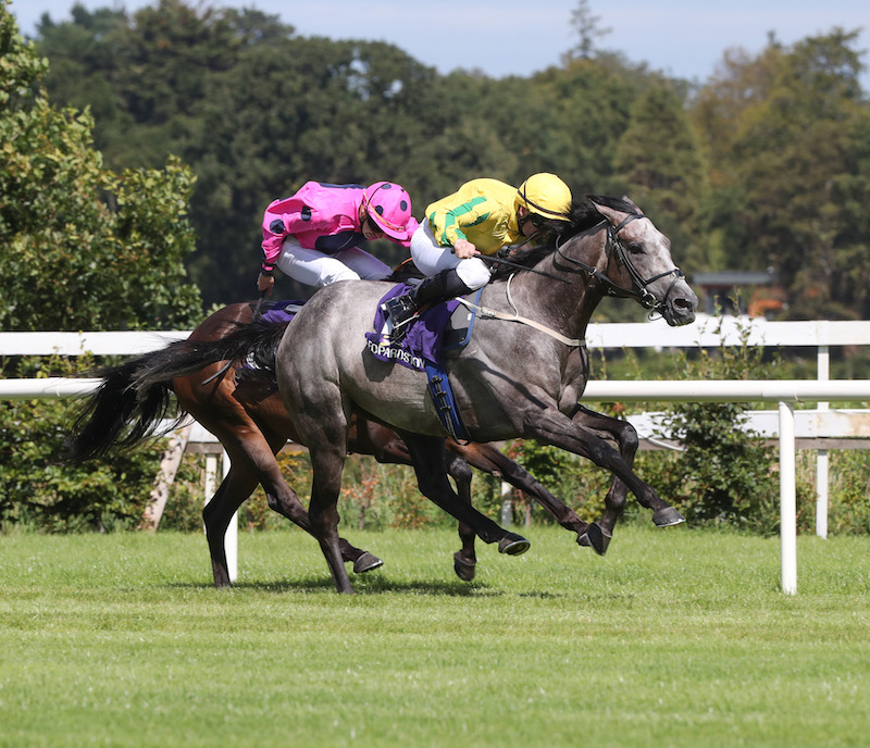 "Ballyroan Stakes (Gr3) : objectif ""Irish St Leger"" pour Nickajack Cave"