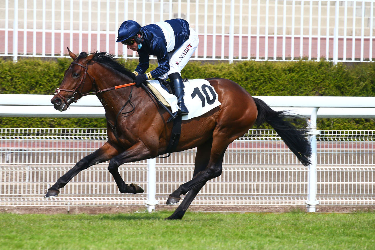 Prix Wild Monarch (L) (Haies) : Paradiso fait impression