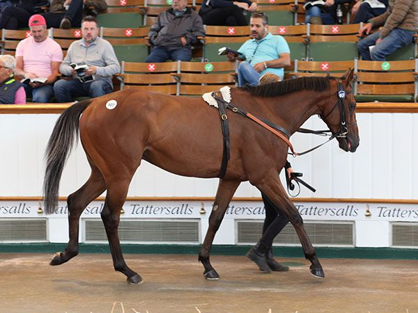 Tattersalls July Sale : 96 % de vendus !