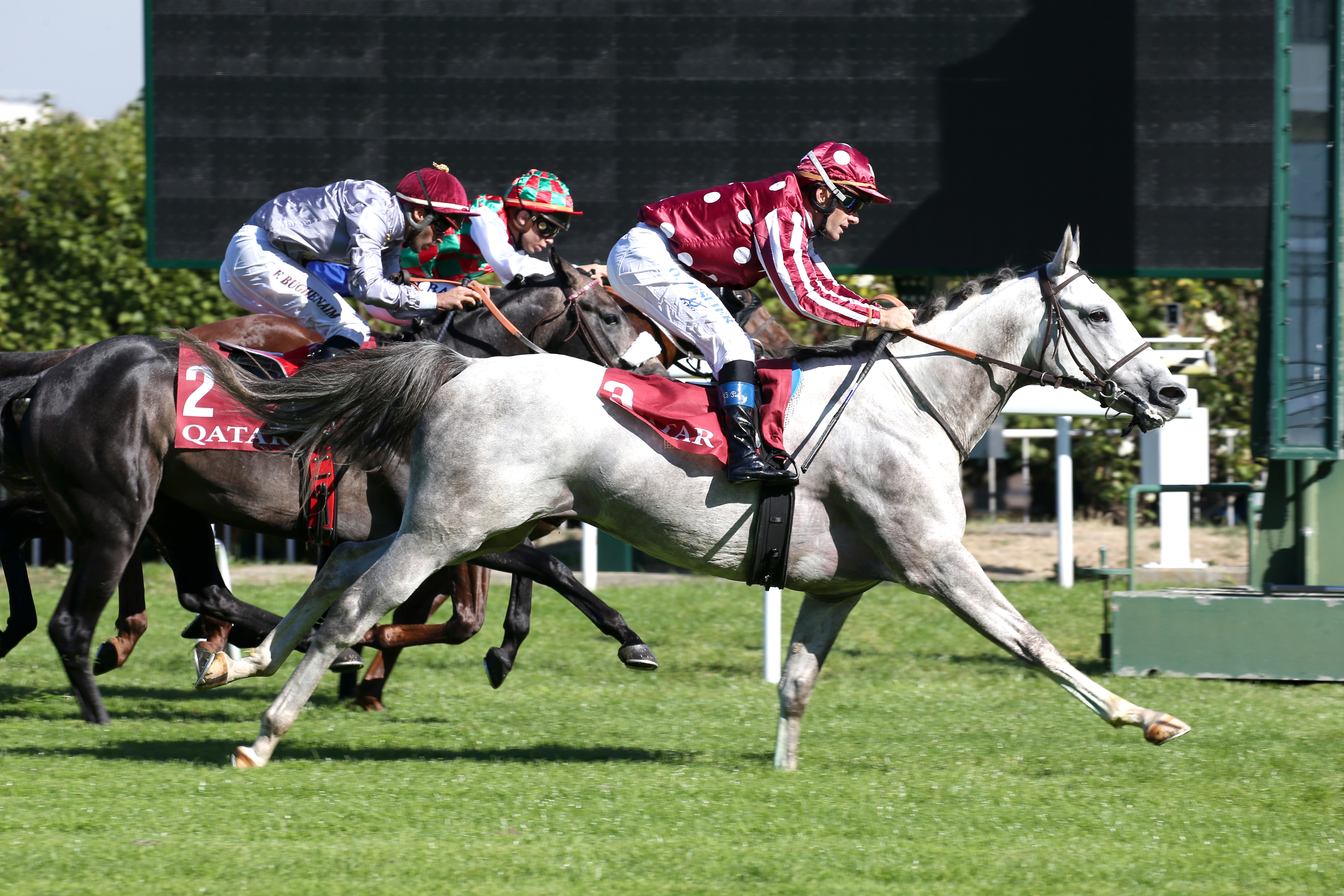 QATAR ARABIAN TROPHY DES POULAINS - MARID UNDERPINS A GREAT DAY FOR GRAND COURGEON