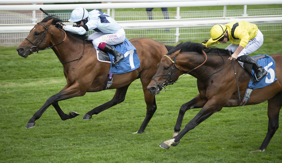 Duke of York Stakes (Gr2) : Starman sprinte vers Royal Ascot