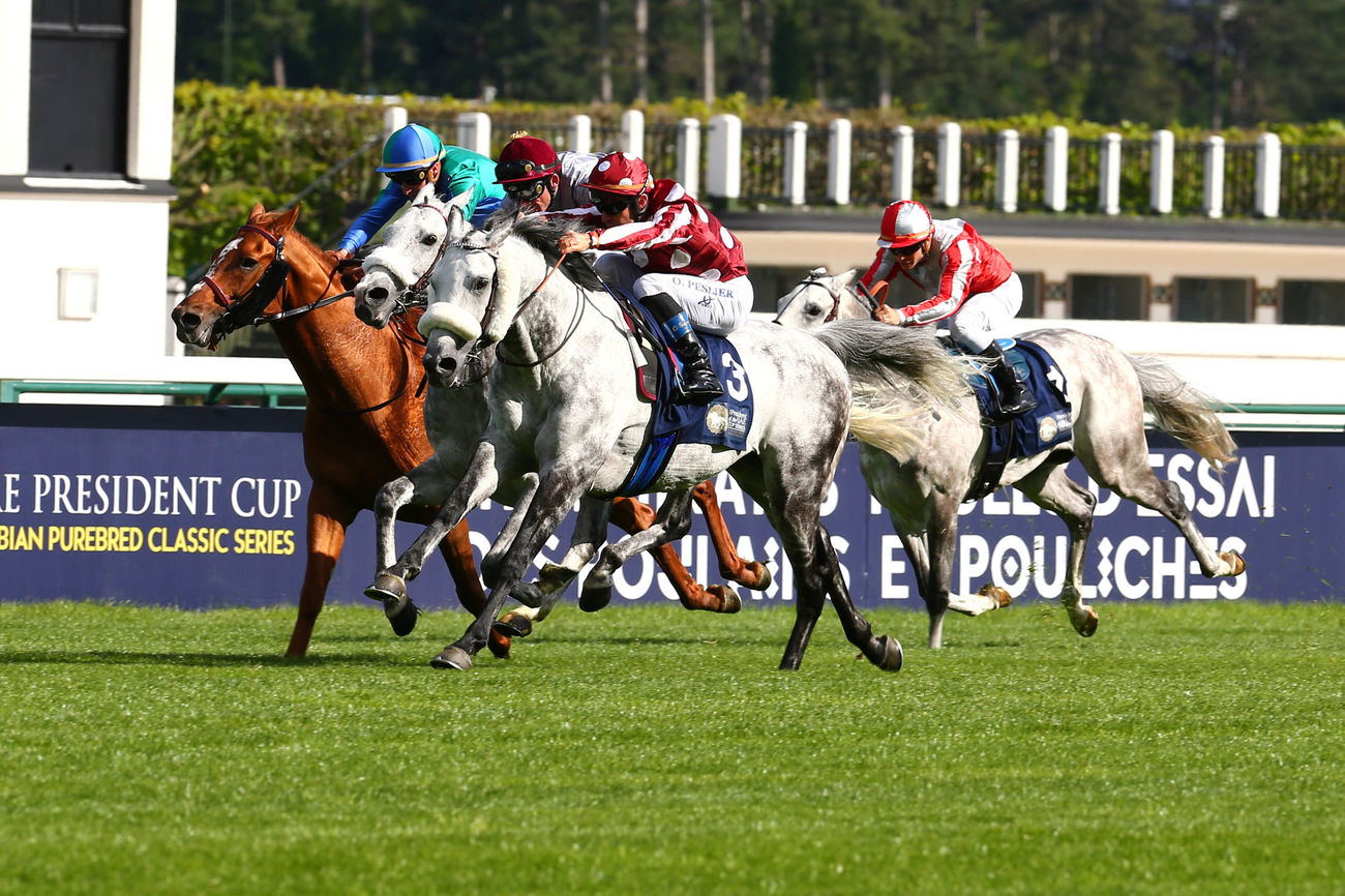 THE WORD OF AFAC - The Association Française du Cheval Arabe outlines its future intentions