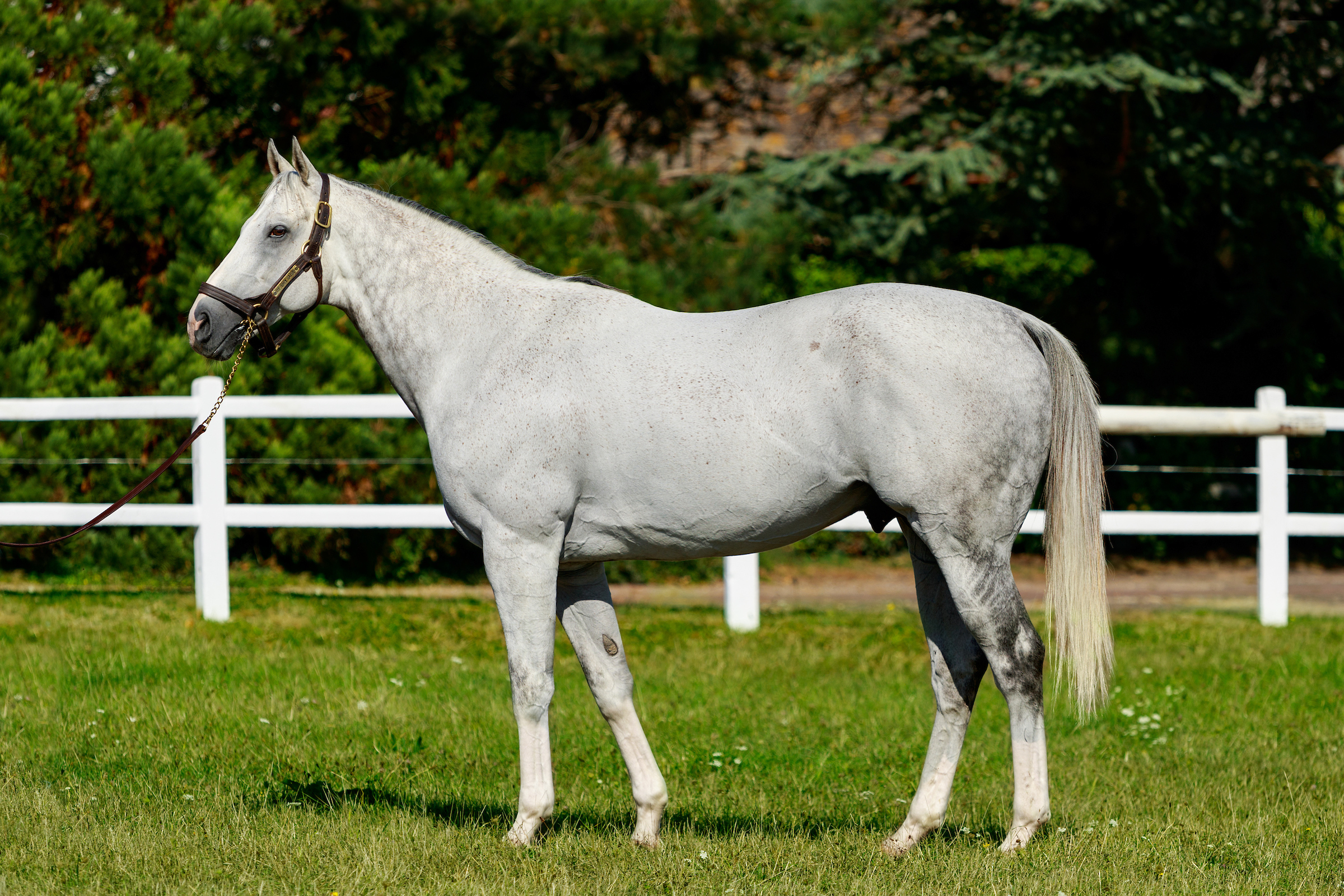 The Grey Gatsby reste à 7.000 €