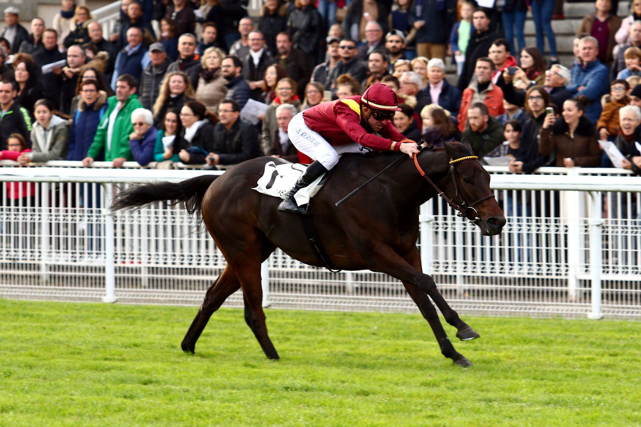 The Right Man et Ilanga visent le Prix de Seine-et-Oise