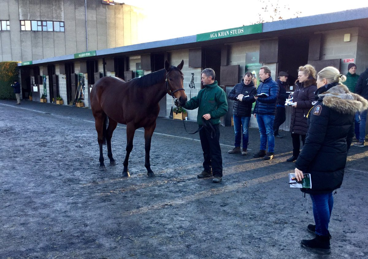 GOFFS BREEDING STOCK SALE - Yulong chaud sur Sea the Stars