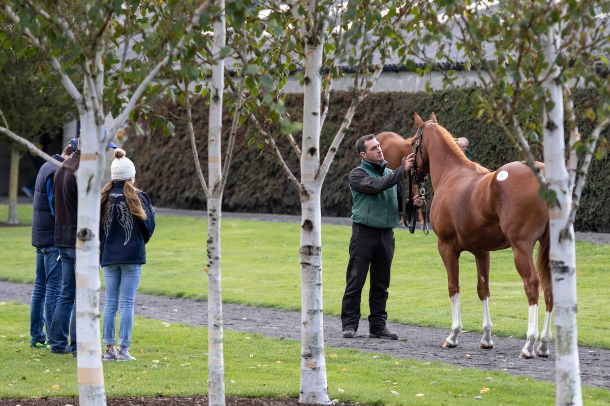 TATTERSALLS IRLANDE - Fairyhouse, la charge des 800